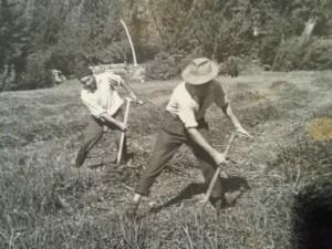 Maragatos segando la hierba